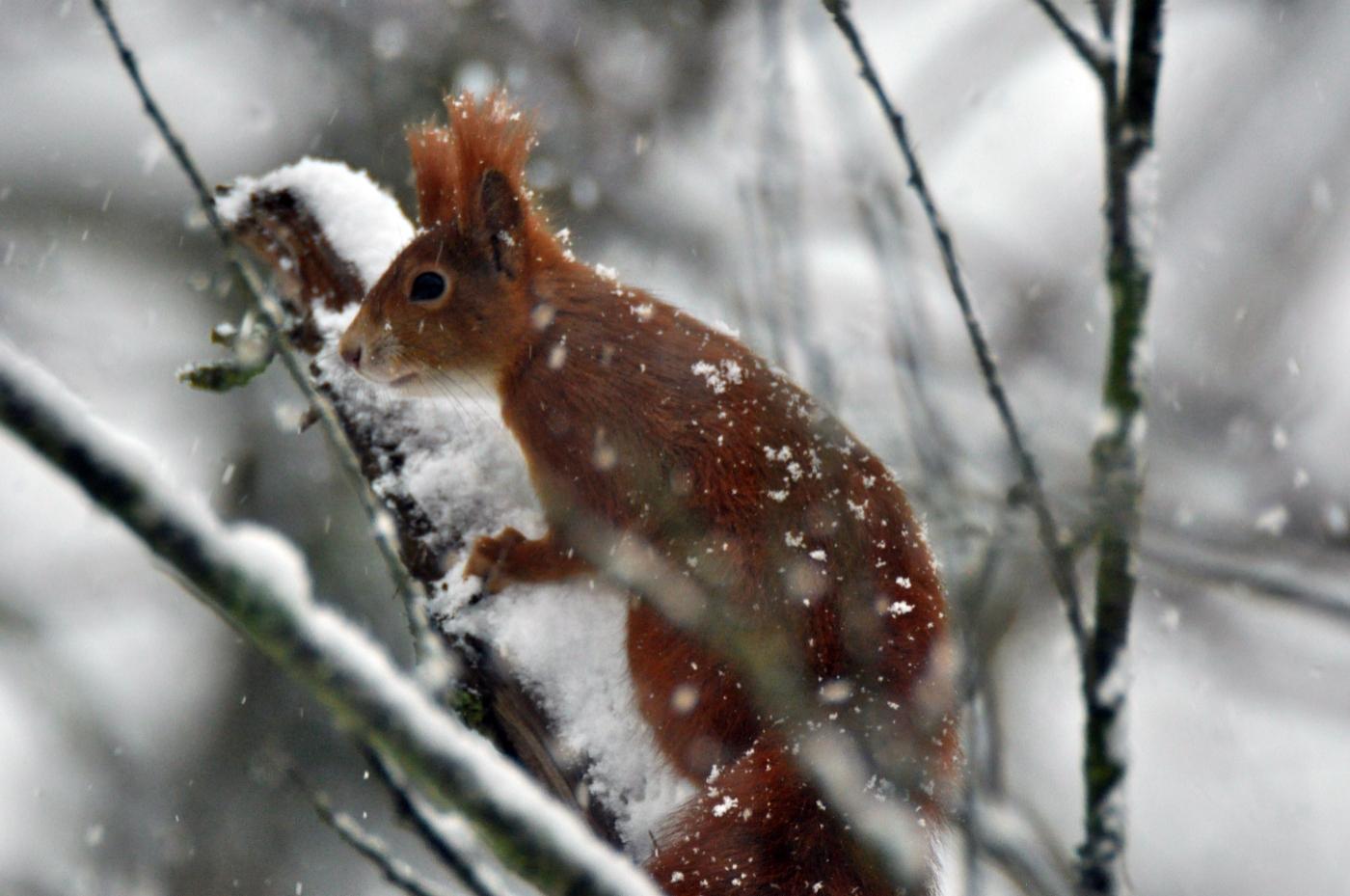 02 Eichh_rnchen im Winter_copyright nautilusfilm_1400